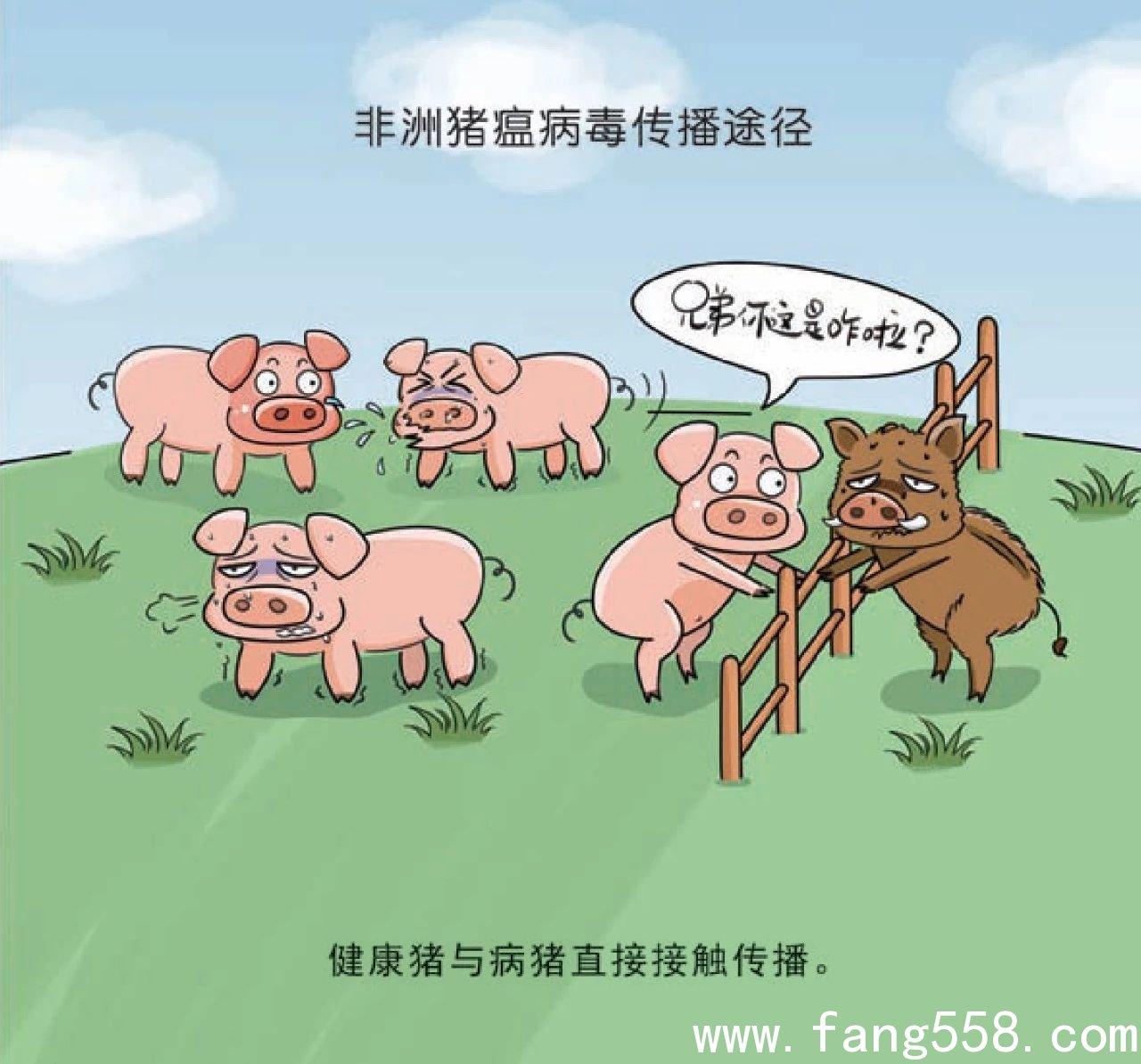 非洲猪瘟深圳权威说法都在这,非洲猪瘟尚未传入深圳市不存在断供之说