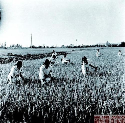 """""""群众首创""""的力量有多大 我国农村改革发源地之一的广汉故事"""